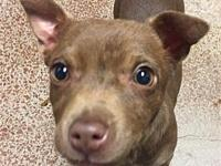 Ginger's story I am a playful puppy who loves to