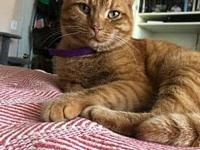 My story GINGER needs a hero!!! This rare ginger lady