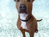 Gingersnap-Adoption pending's story Gingersnap is a