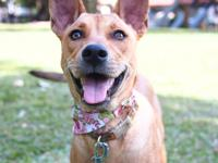Ginna, Spayed female, 6-months-old, 26-lbs  If you