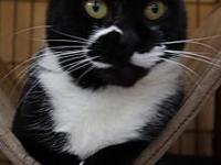 Ginny's story Come check out this magical cat Ginny