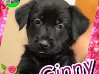Ginny's story Ginny is a young female puppy who was
