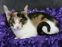 Gisela's story Gisela is a beautiful, sweet, calico