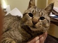 Giselle is a sweet little lady found in Irvington where