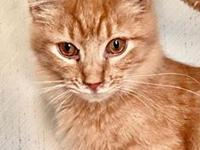 Giz's story Giz is a fun and entertaining kitten that