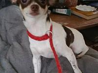 Gizmo's story You can fill out an adoption application