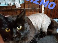 Gizmo's story You cannot go wrong with this gorgeous
