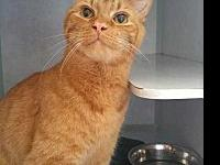 Gizmo's story Gizmo has recently come to us due to a