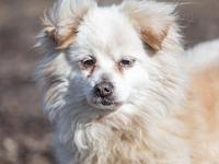 Gizmo's story Gizmo is a 15-lb. mixed-breed male we