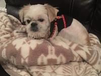 Gizmo's story {s3829code380/} If you would like to
