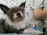 Gizmo is a five year old, 8 lb.,, sweetheart. he loves