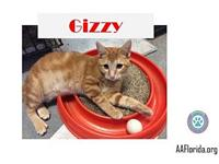 Gizzy's story You can fill out an adoption application