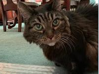 My story Gizzy is a 16-year old Maine Coon cat who has