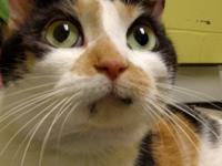 Glenda is a fairly quiet and mature cat, who is looking
