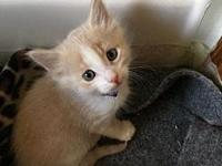 Glendora's story Meow and Hello! I'm Glendora, a male