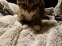 Glenna's story Glenna is a sweet kitten. She is more