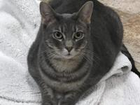 HI there! My name is Glory. I am a grey tabby domestic