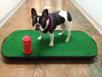 The American Made Go-Doggy-Go Dog Potty TM; go-doggy-go