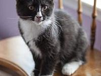Goalie18's story All Purr Partners Adoptable Cats