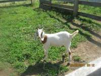 hey i got this goat (doe)about 6 months old like to