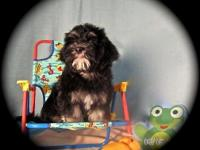 Goatee is a fun male puppy, He loves attention, wants