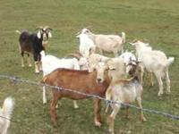 I have 15 goats for sale, need them gone this weekend.