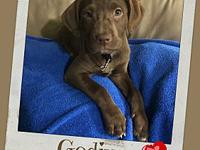 GODIVA's story Godiva is as sweet as chocolate. She