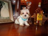DOB July 12, 2014. Austin my chunky monkey is so cute!