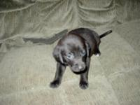Description FREE TO GOOD HOME FEMALE PUP BLACK 10 WEEKS