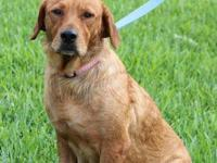 Golden Retriever - Lucy - Large - Young - Female - Dog