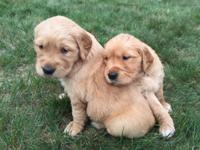 Mother and Father are both AKC registered - both are