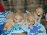 These are APR registered pups.  (American Pet