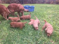 We have 1 male and 1 female puppy still available from