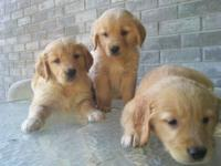 Puppies are 8 weeks old and ready to a new home. I have