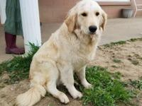 Suki is a sweet girl. She is great with children and