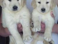 We have sold them to novices and experienced owners,