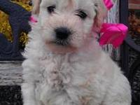 Hi, We are a family breeder of Goldendoodles located in