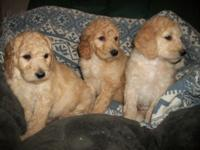 Puppies are right here, least likely generation of