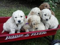 Fabulous Furry Freinds For the Whole Family Golds,
