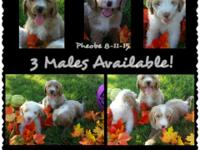 We have 5 puppies left 3 males and 2 females. They have