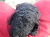 Have one male one female left in black Gorgeous curly