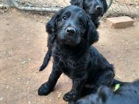 Loveable and loyal, these beautiful pups are ready for