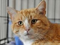 GOLDENTAIL's story Goldentail is FIV positive and will
