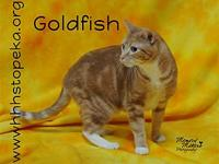 My story Hello there! My name is Goldfish. I'm a loving