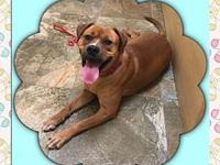 Goldie's story Goldie is a 3 year old Chow/Boxer mix,
