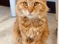 My story Goldie is a Polydactyl cat. Check out my extra