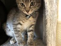 My story I am a playful kitten who loves to explore!I