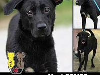 GOMER's story MEET GOMER! A 10-11 month old, male,