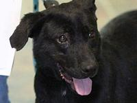 GOMER's story MEET GOMER! A 1-2 year old, male,