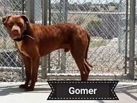Gomer's story Gomer is a shy boy that is a owner turn